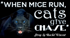 """When mice run, cats give chase."" Stray, Rachel Vincent"